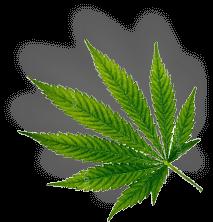 leaf min