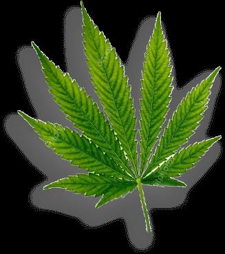 leaf mid